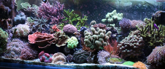 Bring The Sea Indoors With These Beginners Aquarium Tips