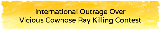 International Outrage Over Vicious Cownose Ray Killing Contest  - July 7, 2016