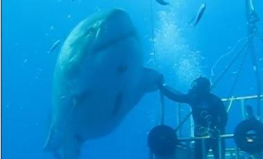 Shark High Five?