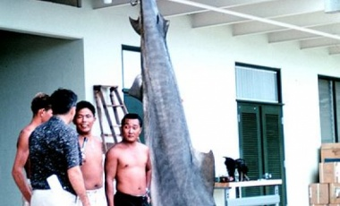 Is Killing Sharks in an Area After an Attack a Waste of Time?